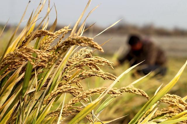 农村集体土地征收有哪些补偿?是农民的一样也不能少